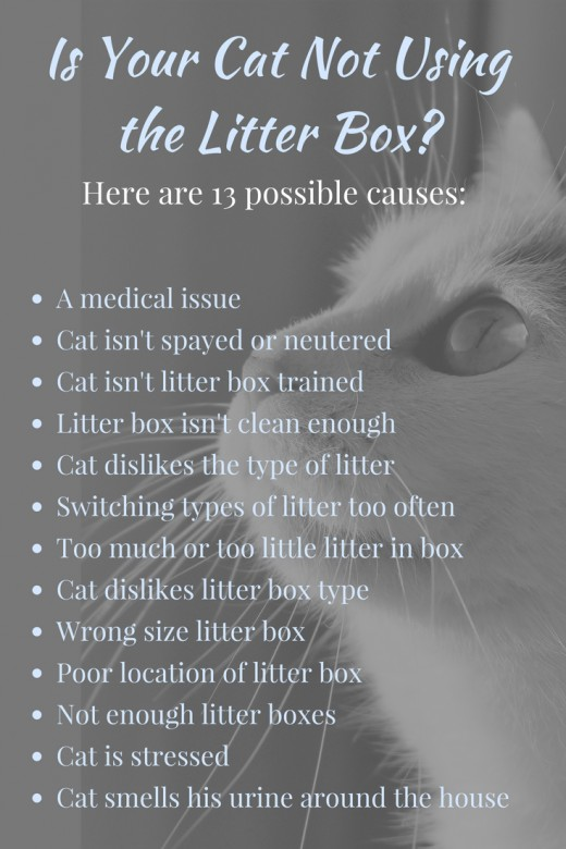 A list of common reasons why a cat might not be using the litter box.