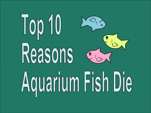 Top 10 Reasons Tropical Aquarium Fish Die