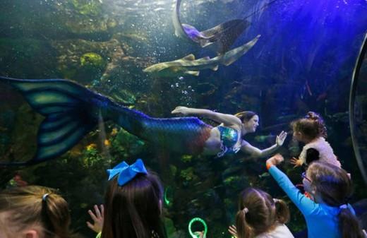 A mermaid interacting with kids at the Virginia Aquarium