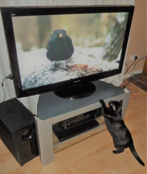 Be sure you turn off electronics when not in use. Are you really using a VCR or DVD player when you are asleep? Turn off surge protectors when not using electronics or lamps connected. Check out how much fun this cat is having looking at the bird! HA