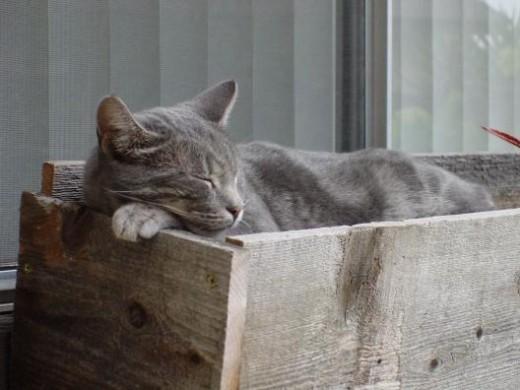 Outdoor domestic cat