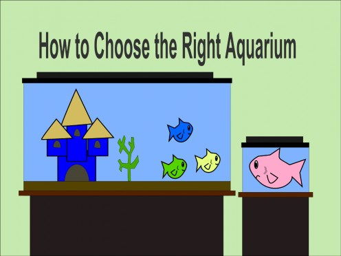 How to Choose the Best Aquarium for Your Home