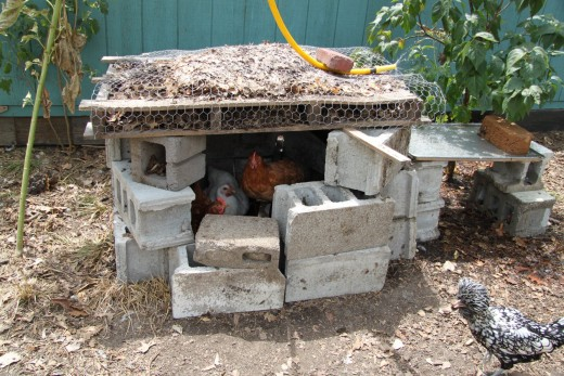 "This ""cooling hut"" constructed of concrete blocks gives chickens a cool place to hide from the summer heat."