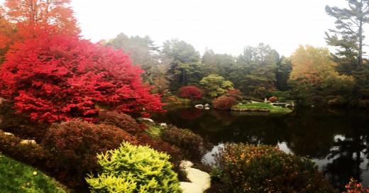 The Asticou Azalea Garden in Fall