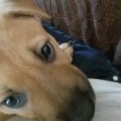 Shanahandleit profile image