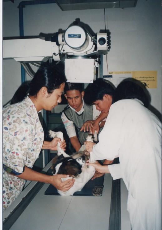 Vets discover Mai Tais broken back