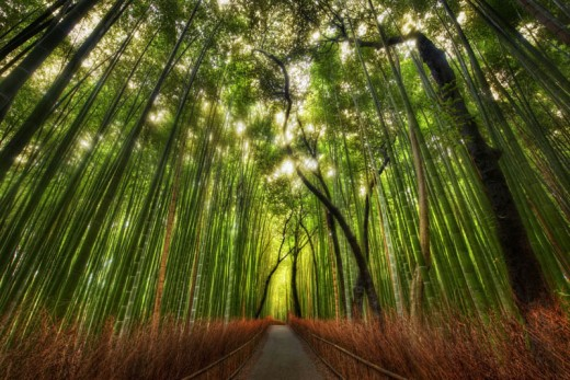 So, why does the bamboo bends?