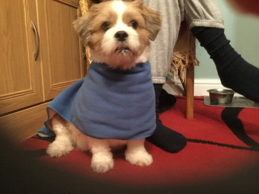 A few stitches and a scarf becomes a coat for Tinka