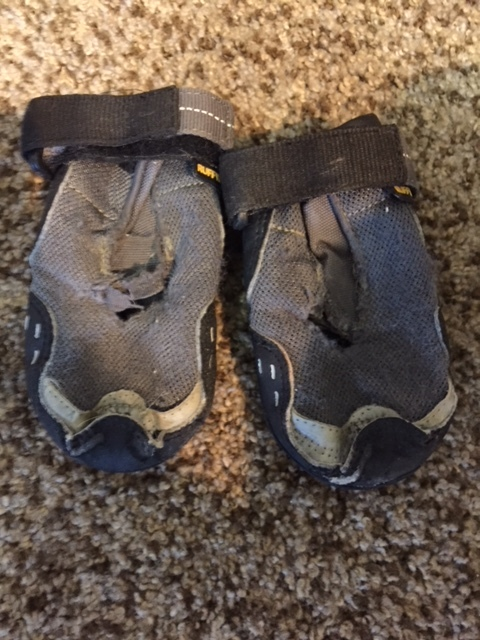 These boots saved Titan's feet as he aged and his peripheral neuropathy progressed