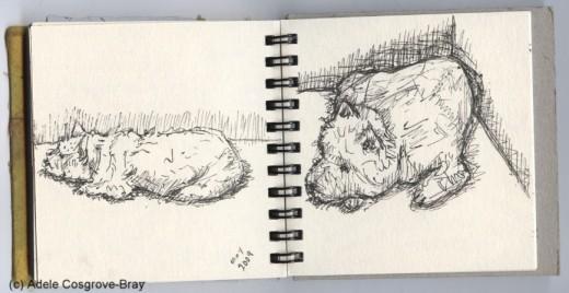 Ink sketch of Ygraine, my West Highland White Terrier.