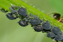 How to Control Garden Insect Pests