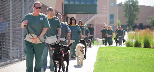 Inmates taking their dogs out for a morning stroll