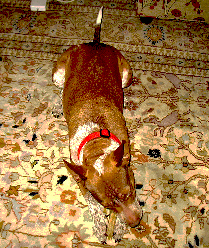Note When Your Dog Scratches an Itch on your Rug or carpet
