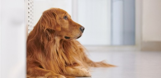 Most good vets would turn away a request for euthanasia on a dog who had more life to live.