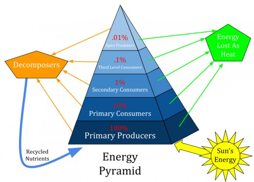 An energy pyramid is a representation of the trophic levels in an ecosystem. Energy from the sun is transferred through the ecosystem by passing through various trophic levels. About 10% of the energy is transferred from one trophic level to the next