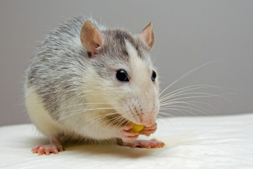 Corner your protagonist like a rat.