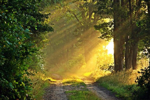 Sunlit forest, the perfect place for a summer solstice rite.