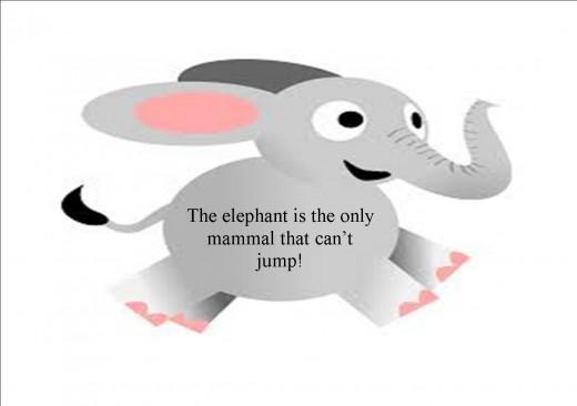 Poor elephants.