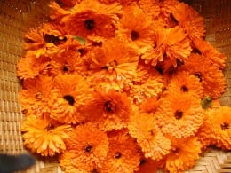 Treat the skin with calendula flowers