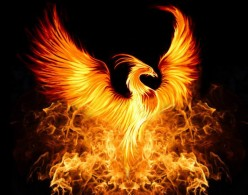 A Phoenix's Cry