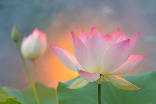 Healing energy flower