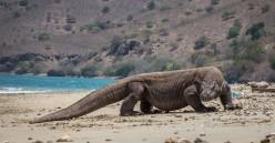 9 Rare Animals Native to Indonesia