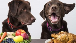 Can Dogs Be Vegetarians? Should I Feed My Dog Meat?