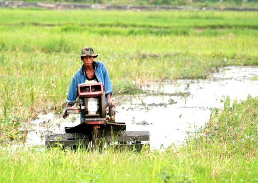 A farmer using kuliglig to get the field ready for rice planting.