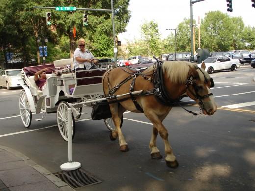 Horse drawn carriage in Charlotte, North Carolina