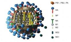 Conspiracy theorist David Icke said say no to Swine Flu vaccine and jabs