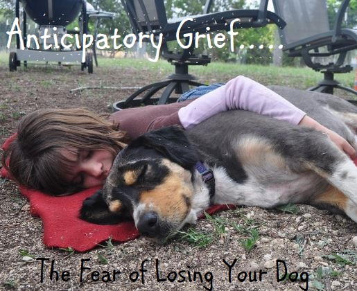 Feeling Anticipatory Grief is Normal During the Dog Dying Process