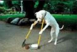 Free tips on dog training