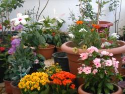 Your Terrace Garden