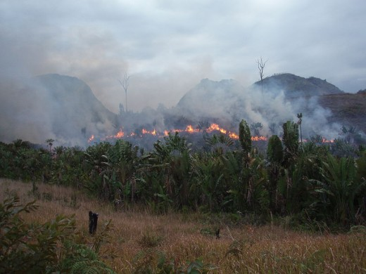 All over the world, forest is cleared to make way for meat and dairy farming. This picture shows the supposedly illegal 'slash and burn' being carried out in Madagascar.