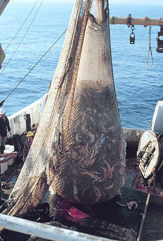 Recent estimates claim that fisheries throw 6.8 million tons of unwanted sea life overboard.