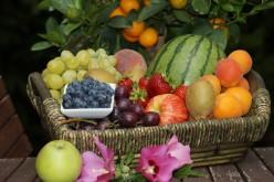 Fruit Basket No.1