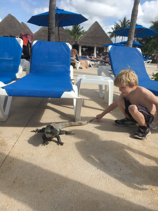 My son was so intrigued by the iguanas!