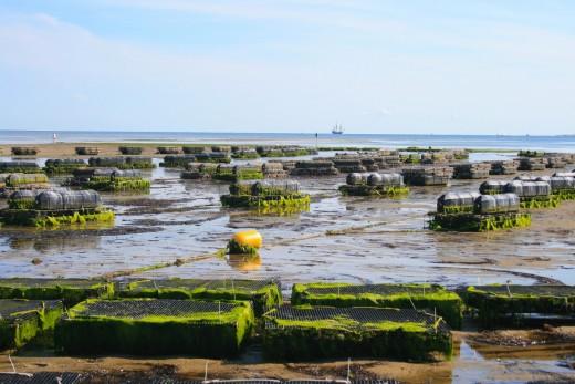 Oyster farm.