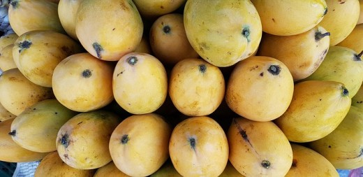 Succulent ripe mangoes used to make you grilled mango chutney that controlled diabetes mellitus