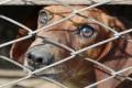 Fight Against Puppy Mills