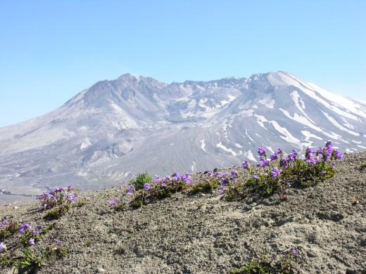 Volcano & flowers.