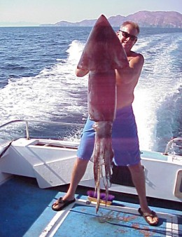 Ихтиологи в шоке: пойманы сразу пять гигантских кальмаров (фото) - Фотогалерея - Новости NEWS.rin.ru - Фото 28844.