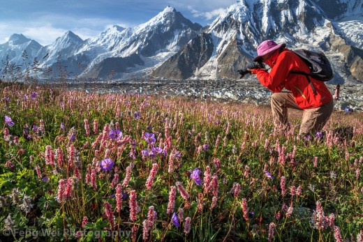 Flowers blossoming at the feet of the tallest mountains of the world.