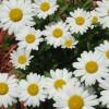 Lindarb profile image
