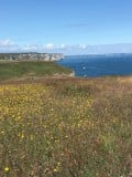 Flamborough Head: A Visitors Guide