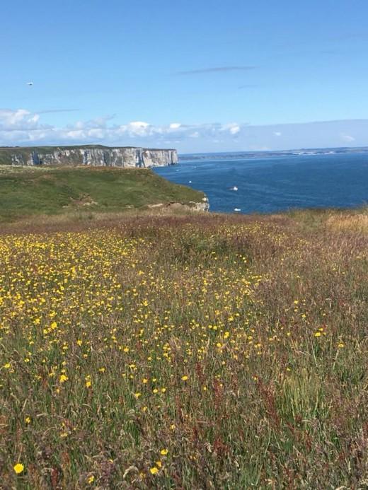 A view of Flamborough Cliffs looking north towards Bempton Cliffs taken in May 2018 taken by my girlfriend.