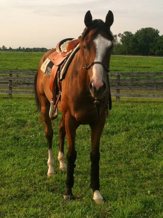 My second heart horse Danny.
