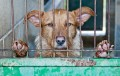 6 Reasons Why You Should Adopt a Dog From a Rescue Shelter