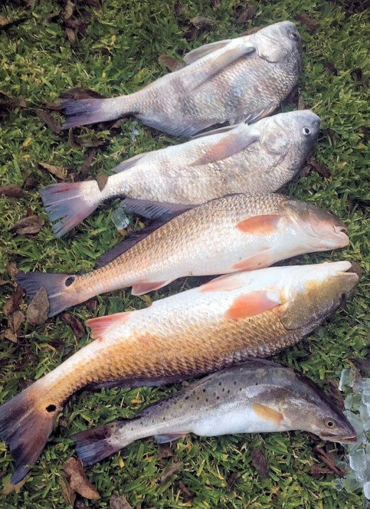 20 Fish Species Caught Surf Fishing Near Houston | HubPages