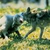 Insanity Wolf profile image